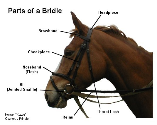 Bridle Ring With Saddle